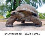 Stock photo giant tortoise geochelone gigantea bird island seychelles 162541967