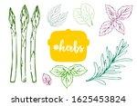 colorful kitchen herbs vector... | Shutterstock .eps vector #1625453824