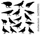 pigeons silhouette  vector  | Shutterstock .eps vector #162550901