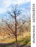 Small photo of Denuded small tree in winter in front of field