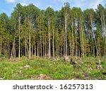 chopping wood | Shutterstock . vector #16257313