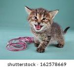 studio portrait of funny little ... | Shutterstock . vector #162578669