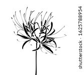 silhouette of a spider lily ...   Shutterstock .eps vector #1625788954