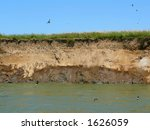 jacks of a swallow in river... | Shutterstock . vector #1626059