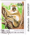 Small photo of GUINEA - CIRCA 1998: A stamp printed in Guinea shows Cercopithecus aethiops, series, circa 1998