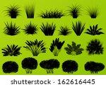 exotic jungle bushes grass ... | Shutterstock .eps vector #162616445