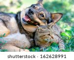 Stock photo dog and cat playing together outdoor 162628991