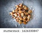 Babylonia Areolata Shellfish...