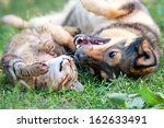 Stock photo dog and cat best friends playing together outdoor lying on the back together 162633491