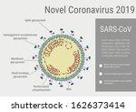 sars coronavirus schematic... | Shutterstock .eps vector #1626373414