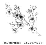 hand drawn cherry branch in... | Shutterstock .eps vector #1626474334