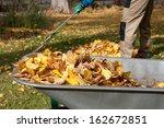 Gardener Raking Autumn Leaves...