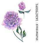 Beautiful Purple Peony Flower...