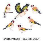 simple goldfinches isolated on... | Shutterstock .eps vector #1626819064