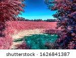 Beautiful Pink Infrared Shots...