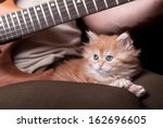 Stock photo kitten lays on man s lap who playing a guitar 162696605