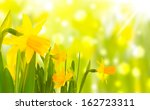 Daffodils In Front Of Bokeh