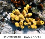 Sea Sponge In Adriatic Depths...