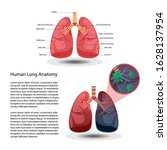 Lung With Cancer  Lung Anatomy...