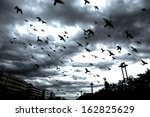Many Flying Pigeons On City...