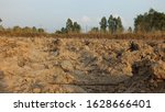 Dry Cornfield In Rural Areas