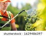 Garden Plants Seasonal Insecticide by Caucasian Professional Gardener. Closeup Photo.  - stock photo