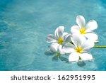 frangipani spa flowers over... | Shutterstock . vector #162951995