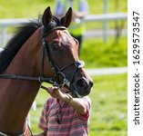 Small photo of Racing steward holding Reins of racehorse on the track