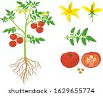 parts of plant. morphology of... | Shutterstock .eps vector #1629655774