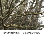 Branches Covered With Moss In...