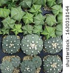 cactus beautiful plant summer... | Shutterstock . vector #1630318144