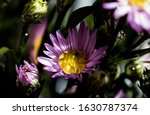macro close up bouquet of the... | Shutterstock . vector #1630787374