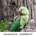 lovely green parrot of hong... | Shutterstock . vector #163088147
