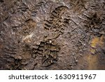 Fresh Boot Footprint In Mud