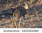 Small photo of Photo of a doe taken back in November
