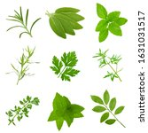 set of different herbs isolated ... | Shutterstock . vector #1631031517