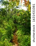 Small photo of small brook streaming through the Atlantic rainforest and cacao plantation
