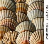 scallop shells background  ... | Shutterstock . vector #163159451