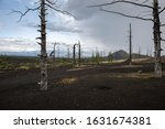 Dead Forest After The Eruption...