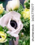Close Up Anemones Flowers And...