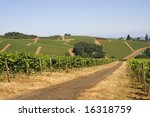 This is a Red Dirt Road Thru Winery on Dundee Hill Oregon - stock photo