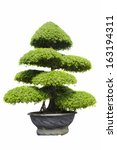 a beautiful tree isolated on... | Shutterstock . vector #163194311