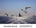Seagulls Over Bosporus In...