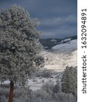 Small photo of Unsettled weather and a frosty tree in the Wenatchee Valley, Washington