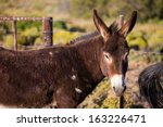 Close Up Portrair Of A Donkey...