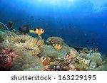 Anemones  Clownfish Underwater...