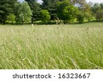 Tall Grass Meadow With Trees I...