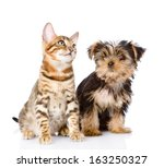 Stock photo little kitten and puppy isolated on white background 163250327