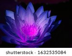 close up fresh bloom classic... | Shutterstock . vector #1632535084