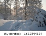 Beautiful Winter Forest In The ...